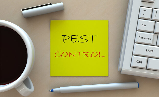 7 Benefits of Pest Control to Consider for New Homeowners