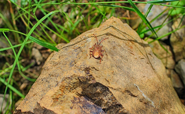 5 Easy and Natural Garden Pest Control Methods