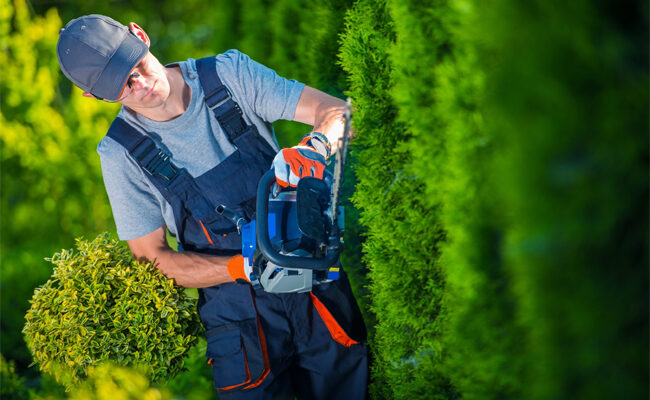 Top 5 Factors to Consider When Hiring a Landscaping Service