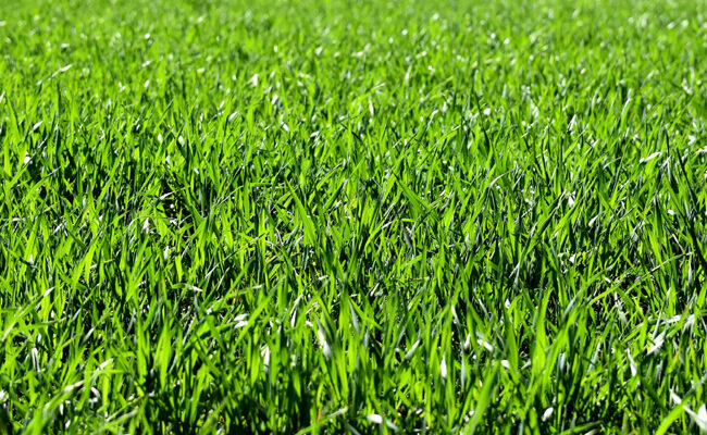 How to Grow the Perfect Lush Green Lawn