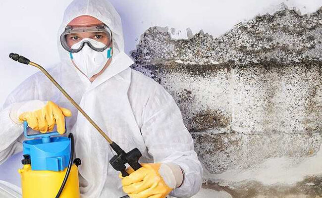How much Mold Inspection and Remediation Costs in Beaumont CA?