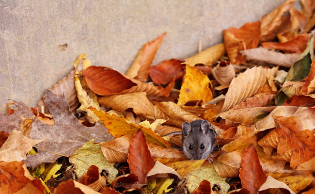 Here's How You Can Keep Pests Out of the Home This Fall