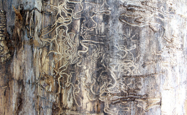 Termite Damage vs Wood Rot: How to Know the Difference