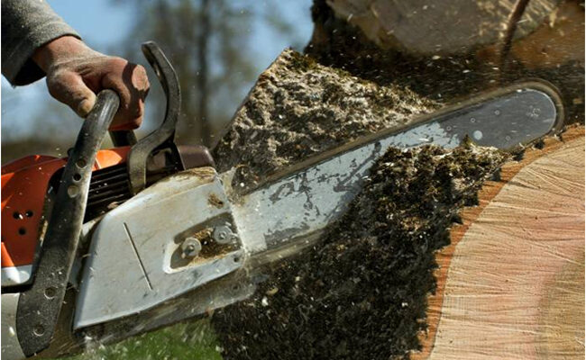 Terms and Phrases You'll Hear When Hiring a Tree Removal Service in Lexington, KY