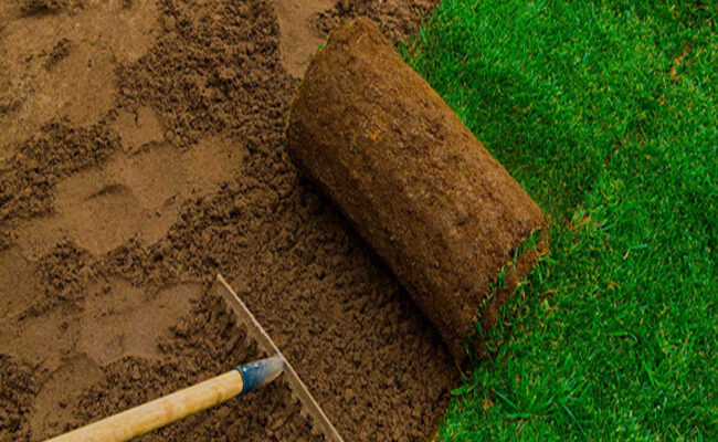 6 Benefits of Lawn and Grass Installation and Replacement Services