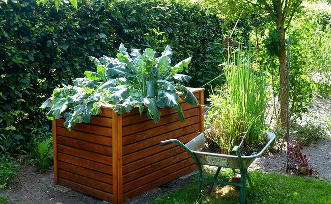 Top 5 Garden Maintenance Tips to Keep Your Backyard Looking Fabulous