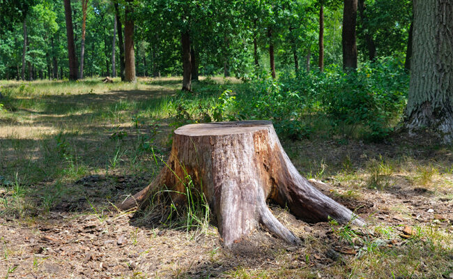 How to Remove a Tree Stump From Your Yard